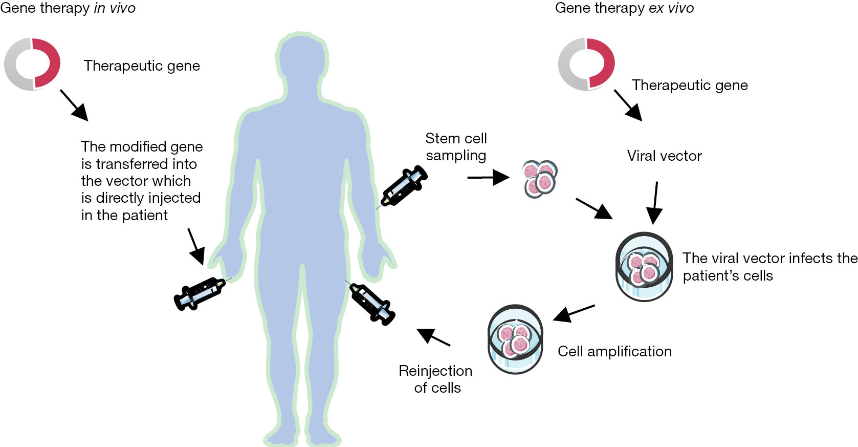 the emergency and impact of gene therapy Bacteria might impact response to cancer therapy what's in your gut bacteria might impact response to cancer and assessed tumor biopsies for gene.